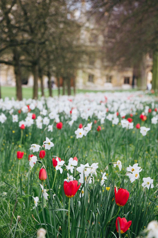 University of Cambridge flowers