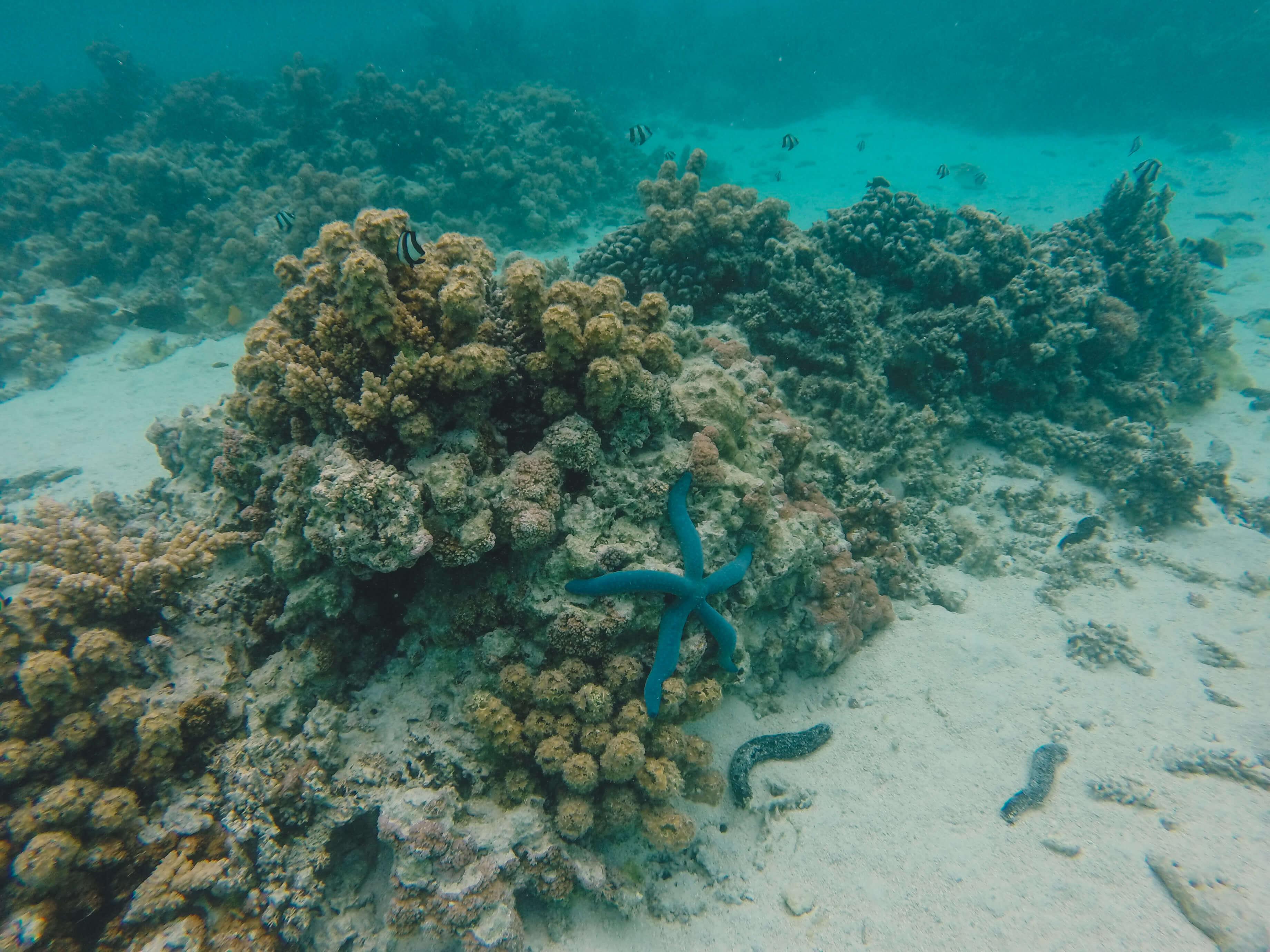 Rarotonga snorkeling