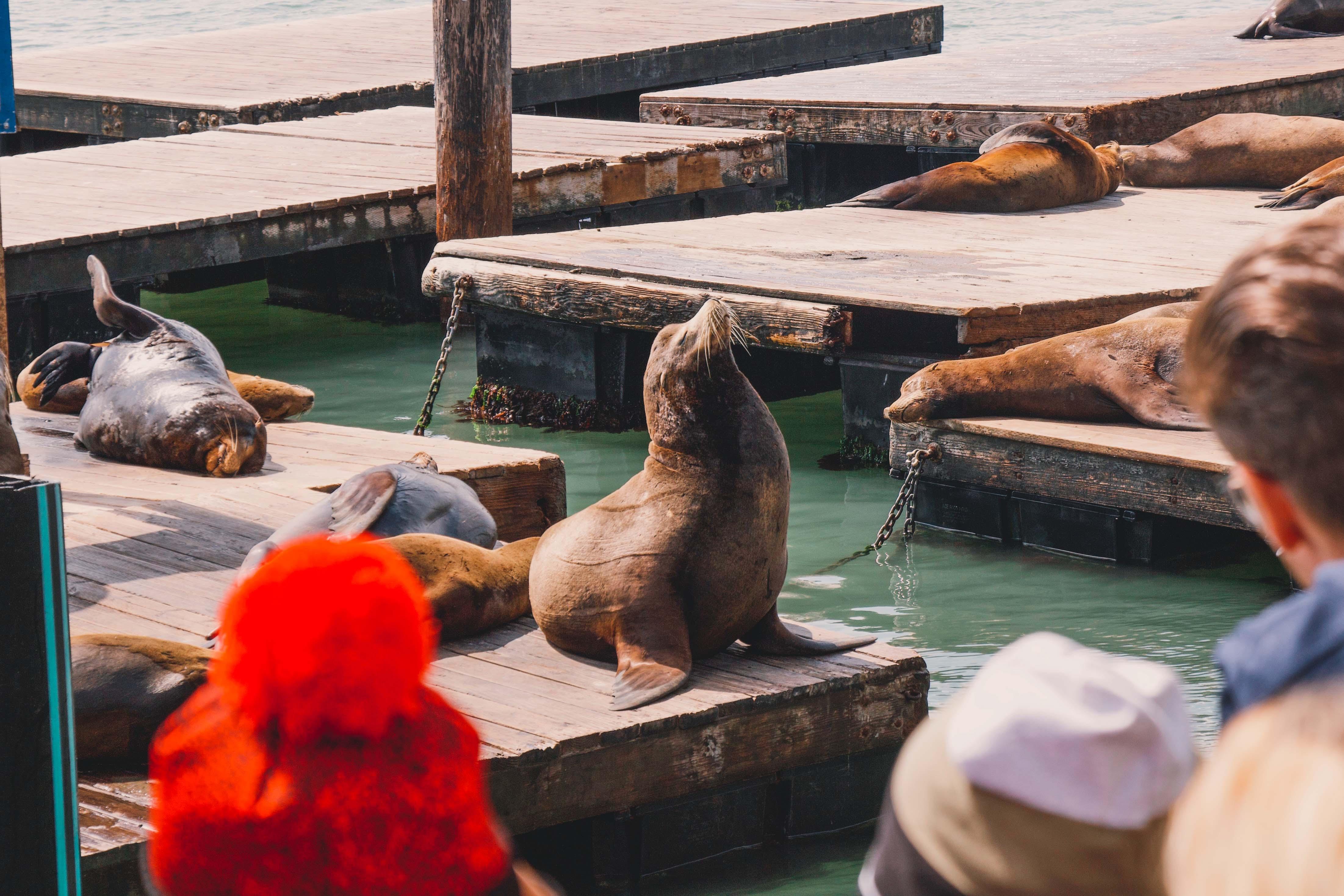 San Francisco seal